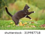 Stock photo beautiful black cat playing in autumn 319987718
