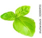 fresh basil | Shutterstock . vector #32000953