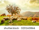 Bible Scene. Sheep Under The...