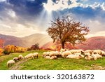 sheep under the tree  in autumn ... | Shutterstock . vector #320163872