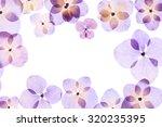 pressed flower  hydrangea | Shutterstock . vector #320235395