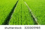 green grass texture from a field | Shutterstock . vector #320305985