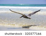 Single Pelican Flying Over The...