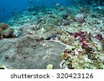abstract underwater scene of... | Shutterstock . vector #320423126