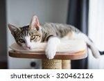 Cute Tabby Kitten Relaxing On...