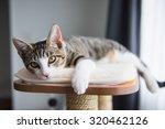 Cute Tabby Kitten Relaxing On...