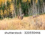 Mule Deer In A Autumn Field ...