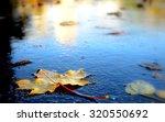 Maple Autumn Leaf On The...