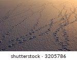 Bird Footprints