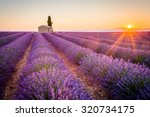 provence  lavender field at... | Shutterstock . vector #320734175