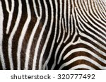 Photo Of The Zebra Fur...