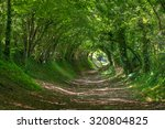 Tree Tunnel. Chichester....