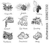 berries. hand drawn set of... | Shutterstock . vector #320827232
