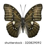 Great Marquis Butterfly In Gre...