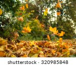 Yellow Leaves Falling From...
