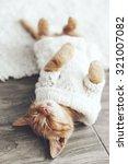 Cute Little Ginger Kitten...