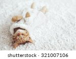 Stock photo cute little ginger kitten wearing warm knitted sweater is sleeping on the white carpet 321007106