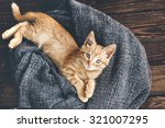 Stock photo cute little ginger kitten is resting in soft blanket on wooden floor and looking at camera 321007295
