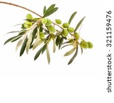 green olives in olive tree... | Shutterstock . vector #321159476