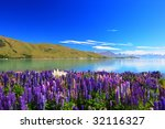 lupines by the lake tekapo  new ... | Shutterstock . vector #32116327