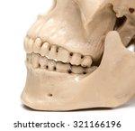 human skull on a white...   Shutterstock . vector #321166196