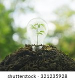 Light Bulb With Small Plant...