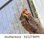 Group Of Colorful Red Parrot In ...
