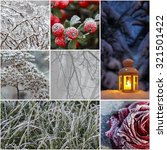 Collage With Frosted Plants An...