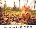 Squirrel red fur funny pets...