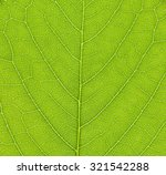 cherry leaf macro background . | Shutterstock . vector #321542288