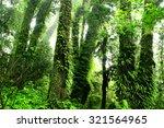 rainforest at inthanon mountain ... | Shutterstock . vector #321564965