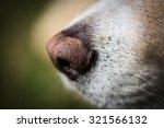 Dog Nose Portrait