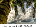 Leaf Coconut Tree And Sky In...