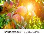 Fresh Peach Tree