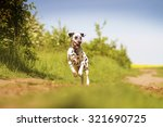 Stock photo beautiful young and fun happy dalmatian dog or puppy running flying and jump comic dog dancing in 321690725