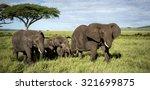 Herd Of Elephants Walking ...
