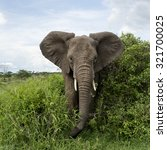Elephant Facing  Serengeti ...