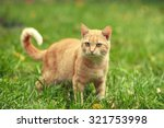 Stock photo red cat walking on the grass in summer 321753998