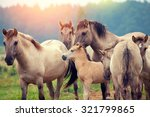 herd of wild horses on the meadow at sunset - stock photo