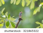 java sparrow | Shutterstock . vector #321865322