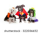 Stock photo three cute little puppy dogs dressed up in halloween costumes including a witch super hero and 322036652