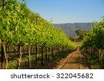 row of vineyard grape vines