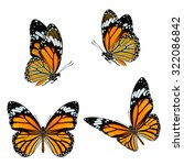 set of beautiful common tiger... | Shutterstock . vector #322086842