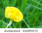 Small Yellow Flower Blooming O...