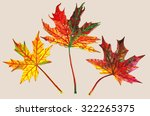 maple leaf | Shutterstock . vector #322265375