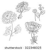 hand drawn chrysanthemum flower ... | Shutterstock .eps vector #322348325