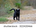 Stock photo black cat walking down the street 322420466