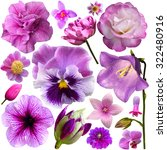 Stock photo collection of pink and purple flowers isolated on white 322480916