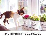 turkish van cat smelling the... | Shutterstock . vector #322581926