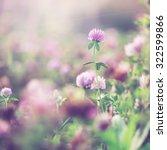 Wild Meadow Pink Clover Flower...